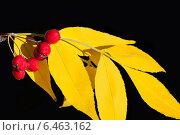 Боярышник с желтыми листьями. Стоковое фото, фотограф VahanN / Фотобанк Лори