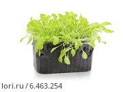 Купить «Салат в контейнере, изолированно», фото № 6463254, снято 17 марта 2013 г. (c) Nelli / Фотобанк Лори