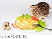 Яичница из перепелиных яиц, свежие яйца и живая перепелка эстонской породы. Стоковое фото, фотограф Елена Кутепова / Фотобанк Лори