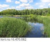 Летний пейзаж - заросший пруд в парке. Стоковое фото, фотограф Светлана Ильева (Иванова) / Фотобанк Лори