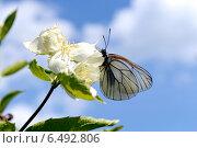 Бабочка на цветке. Стоковое фото, фотограф Владимир Алексеевич / Фотобанк Лори