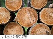 Купить «Спилы поленьев из ствола старого дерева», фото № 6497378, снято 21 августа 2014 г. (c) Родион Власов / Фотобанк Лори