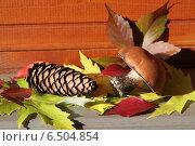 Подосиновик и шишка лежат на кленовых листьях. Стоковое фото, фотограф Buyanka / Фотобанк Лори
