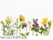 Купить «Цветущие полевые цветы», фото № 6507030, снято 8 октября 2014 г. (c) Ekaterina Andreeva / Фотобанк Лори