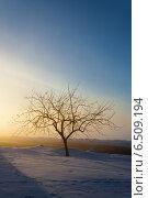 Дерево у дороги в лучах восходящего солнца зимой. Стоковое фото, фотограф Эдуард Данилов / Фотобанк Лори