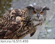 Евразийский Филин ( (Bubo bubo) Стоковое фото, фотограф Bohumil Prazsky / Фотобанк Лори