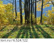 Купить «Группа деревьев в контровом свете с расходящимися тенями в солнечный осенний день», фото № 6524122, снято 8 октября 2014 г. (c) Михаил Марковский / Фотобанк Лори