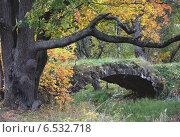 Старая усадьба. Осень. Стоковое фото, фотограф Евгения Кирильченко / Фотобанк Лори