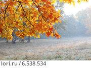 Купить «Дуб с пожелтевшими листьями в лесу», фото № 6538534, снято 12 октября 2014 г. (c) Афанасьева Ольга / Фотобанк Лори