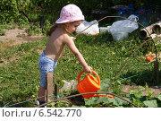 Купить «Девочка поливает огурцы», фото № 6542770, снято 24 июля 2014 г. (c) Александр Мишкин / Фотобанк Лори