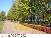 Купить «Осенняя аллея», фото № 6547242, снято 8 октября 2014 г. (c) Александр Замараев / Фотобанк Лори