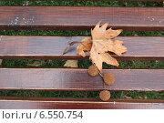 Лист и плоды платана на скамейке. Стоковое фото, фотограф Татьяна Потехина / Фотобанк Лори