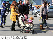 Купить «Женщина везет в детской коляске собак, Шанхай», фото № 6557282, снято 15 марта 2014 г. (c) Влада Милюкова / Фотобанк Лори