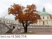 Дерево рядом с лестницей (2014 год). Редакционное фото, фотограф Юлия Качанова / Фотобанк Лори