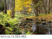 Ручей в осеннем лесу. Стоковое фото, фотограф Юлия Качанова / Фотобанк Лори