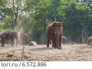 Слоны в зоопарке (2014 год). Стоковое фото, фотограф Анастасия Улитко / Фотобанк Лори