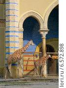 Жирафы в зоопарке (2014 год). Стоковое фото, фотограф Анастасия Улитко / Фотобанк Лори