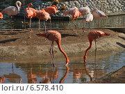 Купить «Розовый фламинго в Московском зоопарке», эксклюзивное фото № 6578410, снято 28 сентября 2014 г. (c) lana1501 / Фотобанк Лори