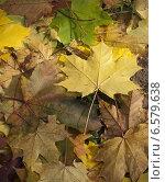 Кленовые листья на земле. Стоковое фото, фотограф Dmitry Rumyntsev / Фотобанк Лори