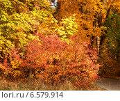 Осенняя листва. Стоковое фото, фотограф Dmitry Rumyntsev / Фотобанк Лори