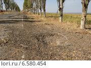 Красивая аллея возле Саур-Могилы (2014 год). Стоковое фото, фотограф Копылов Сергей / Фотобанк Лори