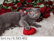 Купить «Красивый британский кот и много красных роз», фото № 6583402, снято 24 октября 2018 г. (c) Останина Екатерина / Фотобанк Лори