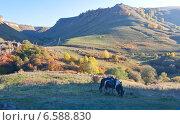 Осень на пастбищном хребте Северного Кавказа. Лошади оседланные на переднем плане. Стоковое фото, фотограф Эдуард Сычев / Фотобанк Лори