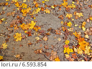 Осенняя насыпная дорожка с желтыми листьями клена, березки, дуба и осины. Стоковое фото, фотограф Daniela / Фотобанк Лори