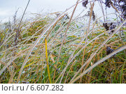 Лёд на стеблях осенней травы. Стоковое фото, фотограф Александра Андрющенко / Фотобанк Лори