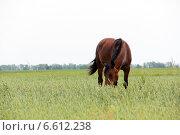 Купить «Лошади на весеннем лугу», фото № 6612238, снято 10 июня 2014 г. (c) Руслан Шакуров / Фотобанк Лори