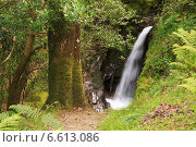 Купить «Водопад в Горном Национальном парке Виклоу, Ирландия», фото № 6613086, снято 21 августа 2014 г. (c) Юлия Машкова / Фотобанк Лори