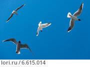 Купить «Четыре летящие чайки в синем небе», эксклюзивное фото № 6615014, снято 15 июня 2014 г. (c) Короленко Елена / Фотобанк Лори