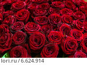 Огромный букет темно красных роз. Стоковое фото, фотограф Ольга Сейфутдинова / Фотобанк Лори