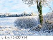 Купить «Заиндевевшие деревья на фоне голубого неба», фото № 6633714, снято 7 декабря 2010 г. (c) Татьяна Кахилл / Фотобанк Лори