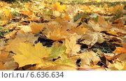 Купить «Жёлтые осенние листья», видеоролик № 6636634, снято 3 ноября 2014 г. (c) Юрий Пономарёв / Фотобанк Лори
