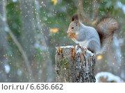 Купить «Белка сидит на пне», фото № 6636662, снято 14 октября 2014 г. (c) Икан Леонид / Фотобанк Лори