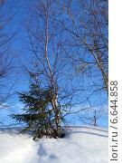 Купить «Зимняя природа», фото № 6644858, снято 1 апреля 2012 г. (c) ElenArt / Фотобанк Лори