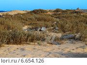 Пластиковые бутылки и мусор в пустыне. Египет. Стоковое фото, фотограф Марина Зубрицкая / Фотобанк Лори