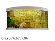 Купить «Красивый аквариум с оформлением в египетском стиле», фото № 6673686, снято 22 мая 2019 г. (c) Евгений Ткачёв / Фотобанк Лори