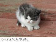 Купить «Маленький котёнок», эксклюзивное фото № 6679910, снято 30 августа 2014 г. (c) Дмитрий Неумоин / Фотобанк Лори