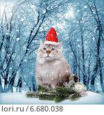 Купить «Сибирский кот в колпаке Санта», фото № 6680038, снято 3 декабря 2012 г. (c) ElenArt / Фотобанк Лори