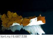 Осенний желтый лист. Стоковое фото, фотограф Давид Арутюнов / Фотобанк Лори