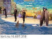 Купить «Дельфинарий парка Ривьера, город Сочи. Инструктора выступают с дрессированными дельфинами», фото № 6697318, снято 27 марта 2014 г. (c) Игорь Долгов / Фотобанк Лори