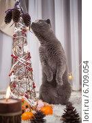 Купить «Красивый британский кот у новогодней елки», фото № 6709054, снято 25 апреля 2018 г. (c) Останина Екатерина / Фотобанк Лори