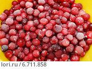 Купить «Клюква, замороженные ягоды покрытые инеем», эксклюзивное фото № 6711858, снято 6 ноября 2014 г. (c) Dmitry29 / Фотобанк Лори