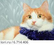 Купить «Рыжий кот с новогодней мишурой на шее», фото № 6714406, снято 1 января 2013 г. (c) Курганов Александр / Фотобанк Лори