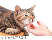 Купить «Ребенок чешет кошке шею», эксклюзивное фото № 6717242, снято 20 ноября 2014 г. (c) Куликова Вероника / Фотобанк Лори