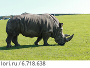 Купить «Носорог», фото № 6718638, снято 18 апреля 2014 г. (c) Ivanova Irina / Фотобанк Лори