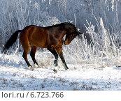 Зимний танец. Стоковое фото, фотограф Елена Зенкович / Фотобанк Лори