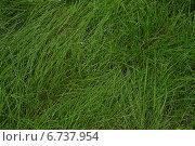 Зеленая трава. Стоковое фото, фотограф Евгений Виноградов / Фотобанк Лори